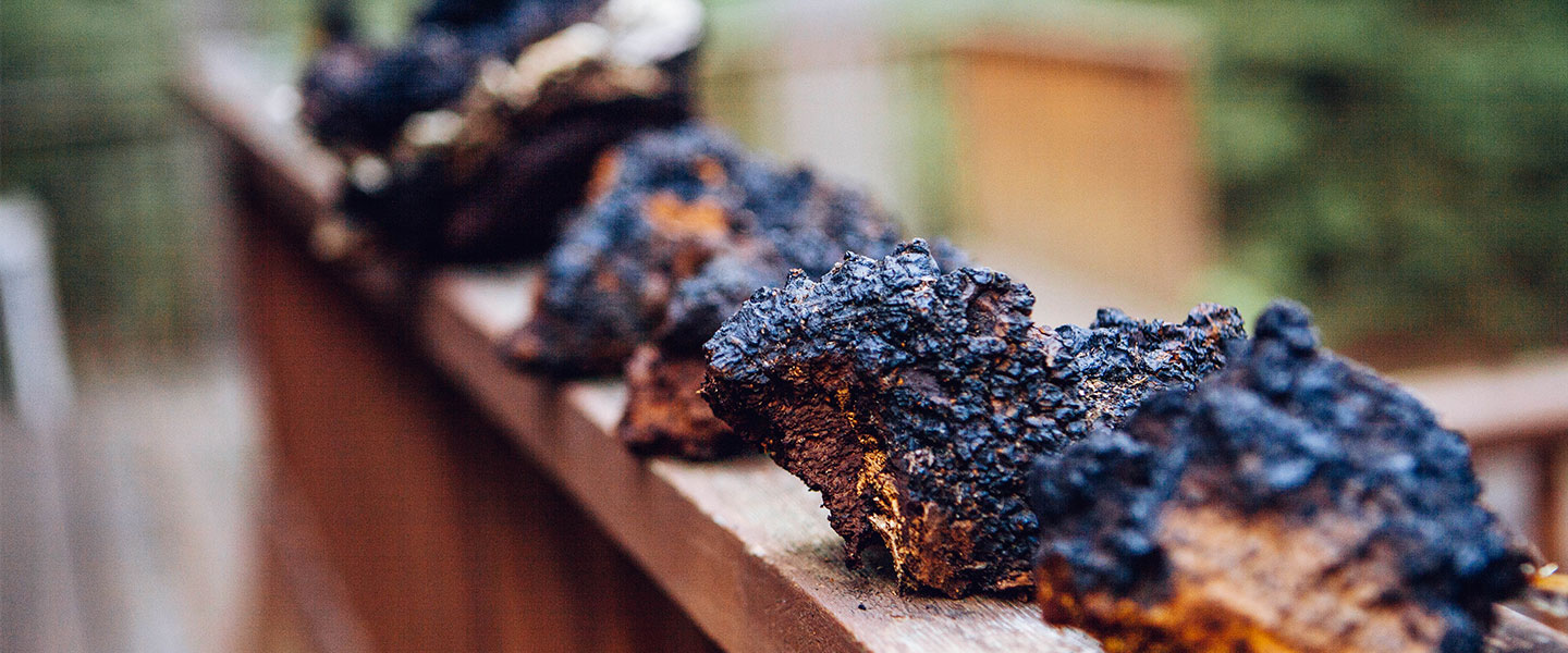 Your Top 7 Questions About Chaga Answered